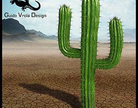 3D model Saguaro cactus