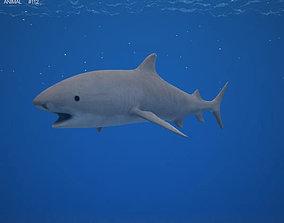Tiger Shark Galeocerdo Cuvier 3D model