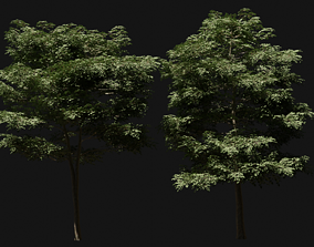 London Plane Trees 3D model