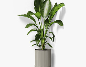 3D strelitzia plant angled