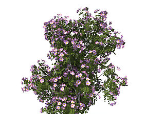 3D model dogrose Rosa canina no5