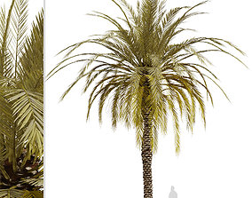 Set of Phoenix dactylifera or Date Palm trees - 4 Trees 3D