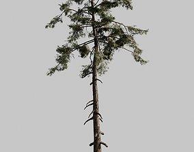 Pine 01 Corona 3D