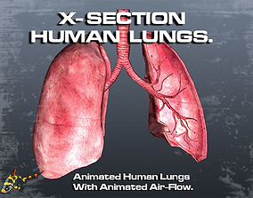 3D asset animated Cross Section Human Lungs