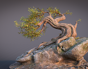 3D model low-poly Fantasy Old Tree On A Rocky