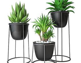 3D Plant Set 3