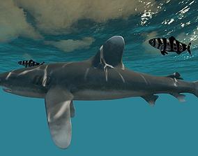 Oceanic White tip Shark 3D model