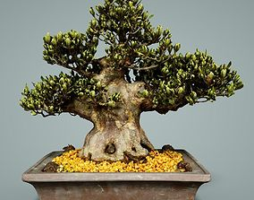 3D asset game-ready Bonsai Tree bonsai