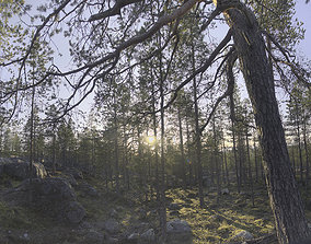 3D model Nature HDRI - Forest Glade