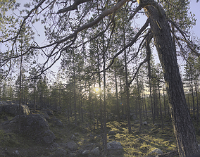 3D Nature HDRI - Forest Glade