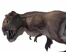 3D model animated Realistic Tyranasaurus rex