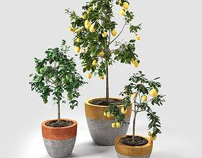 Lime and Lemon Trees set 02 3D