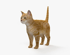 3D model Ginger Cat HD