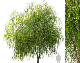 3D Weeping Willow 2