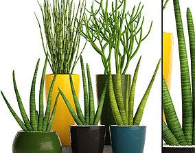 Sansevieria cylindrica set 3D model