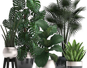 exotic 3D model Collection of Exotic plants