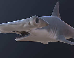 hammerhead shark 3D asset animated realtime
