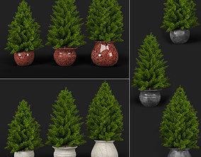 3D model Pine trees in pots