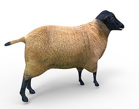 rigged 3D Sheep Rigged low poly