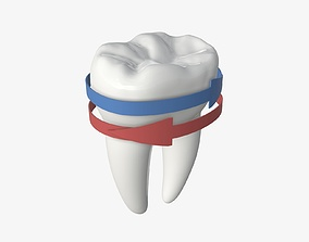 Tooth molars with arrow 02 3D model
