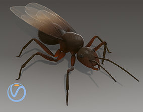 3D model Flying Ant Rigged