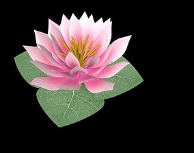 3D model realtime Water Lily
