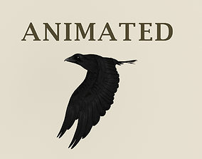 3D asset cycle animated flying realistic crow