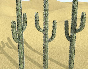 3D model Cactus with Particle System