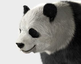 3D Panda with realistic fur