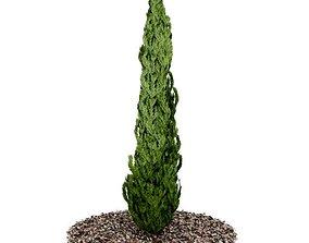 Fern Based Topiary Tree 3D