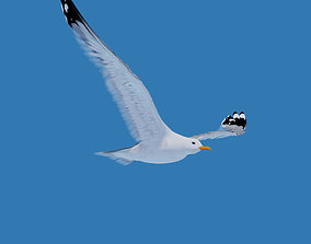 3D asset low-poly Animated Seagull