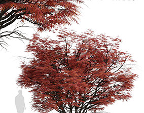 3D Set of Acer Palmatum or Laceleaf Japanese Maple Trees 2