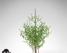 XfrogPlants Cornelian Cherry Dogwood 3D model