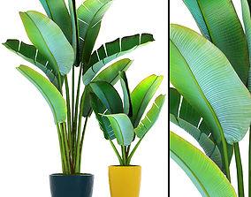 3D Ravenala palm 2