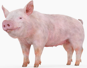 Pig Rigged with Fur 3D model