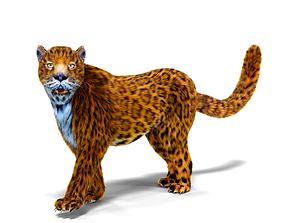 Fur Leopard Rigged 3D asset