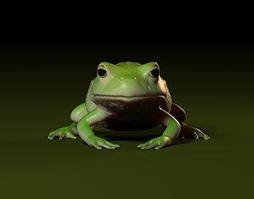 Frog 001 3D