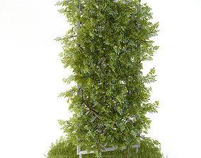 tree 3D Perennial climbin plan for the garden