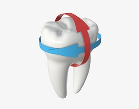 3D model Tooth molars with arrow 01