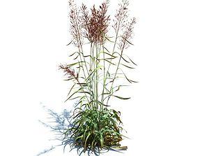 Spodiopogon Sibiricus Grass 3D