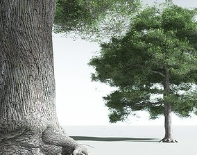 EVERYPlant English Oak 20 -- 10 Models 3D