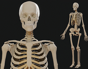 Skeleton PBR 3D asset realtime