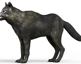 3D model Black Wolf With PBR Textures