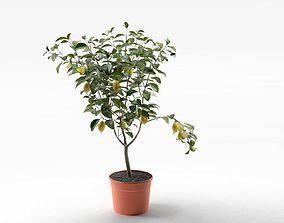 Lemon Tree in Pot 02 3D model pot