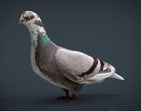 Dove Low-Poly 3D asset