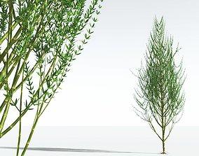 3D EVERYPlant Ridged Horsetail Tree 05 --12 Models--