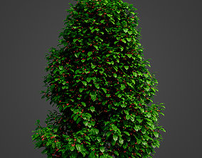 2021 PBR Holly Collection - Ilex Aquifolium 3D