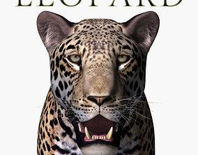 animated Realistic Leopard no fur - 3d model leopard