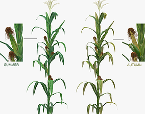 Corn Low-Mid Poly 3D asset