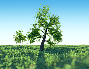 Set of Tree models - small and old large tree 3D asset 2